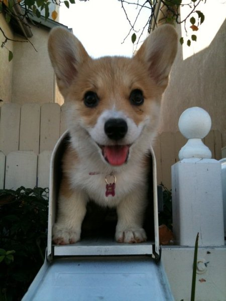 corgi-mailbox